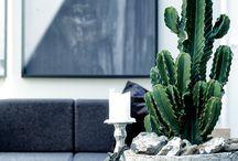 Potted Plants / by Norma de Langen   Daisy Loves Design