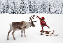From Start to Christmas  / by Canadian Tire