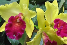 orchids:) / by Gisela Valdes