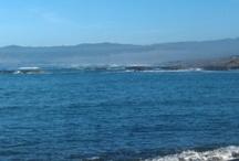Northern California Coast / Beauty of the Northern California Coast. / by Peggy McGee
