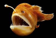 Underwater Life / by Jeremy Pierce