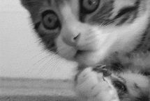 Smitten Kitten / by Jan Bolen
