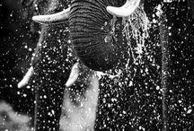 Elephant Love... / by Greta Hansen-Money