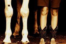 Horsey Stuff / by Hayleigh Boyd
