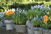 Gardening / by Fanny Rinaldini