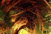 Bäume / by Angelika Durchschlag