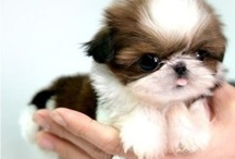 Animals<3 / Lots of luv 2 these cute animals! / by Isabel Horan