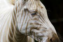 Animal Kingdom / by Sarah Bauer
