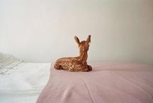 deer / by Yael Shinkar