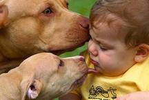 Pitbulls and babies / by Jennifer Doxakis