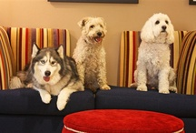 Pineapple Pups / We <3 dogs. Your best furry friend is a welcome guest at all of our hotels.  / by Pineapple Hospitality Seattle