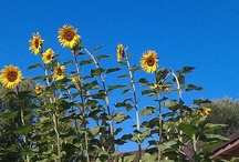 My Garden / Things I grow / by Anita Allen