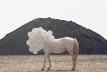 Arts & Photography / by Susanne Thierfelder