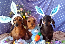 Dachshunds and Other Cute Animal Things / by Linda Abele