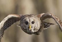 Birds / by Mary Ann Parks