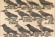 crows | ravens | blackbirds / by Kim Ramey