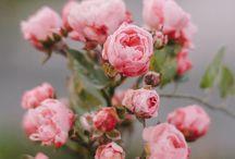 Beautiful inspiration / by Maranda Brown