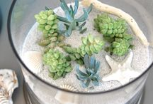 Succulents / by Sharon Harnist