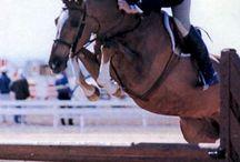 Horse Shows / by Jennie Carleton