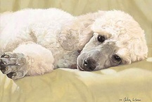 dogs / by Suzanne Rosenblum