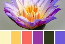 Color Inspiration / by Sarah Micael
