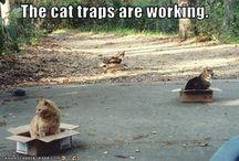funny! / by Kristine Trasport