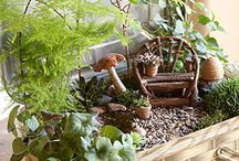 Fairies, Fairy Gardens & Ferns / by Edie Marie