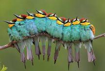 Birds / by Rachael Ashe