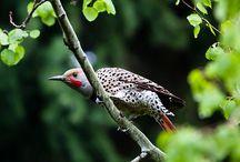 birds / by Merle Loman