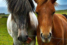 Animal Lovers / A variety of animals we love / by PersonalFitness3.com