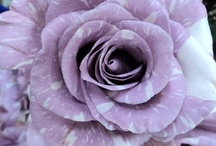 FLORAL ARTISTRY / Flowers and Arrangements I like / by Judy Carrino