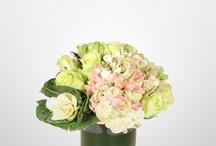 flowers / by seleta hayes howard
