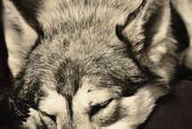 Furry friends / by Stefanie Ring