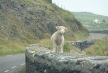 Ireland's furry friends / by Tourism Ireland