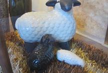 Sheep / by Ann P