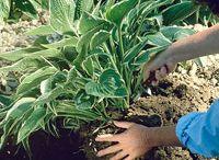 GARDENING TIPS / Great gardening tips... / by Di Van Poppelen