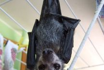 Bats / by Kourtney Summers
