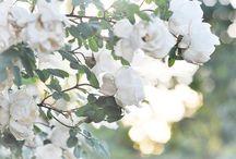 flowers / by Kate Lee