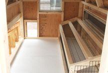 Farm--Chicken house rennovation / by Debbie Sheegog