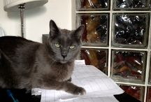Foster Homes Needed! / by Anjellicle Cats