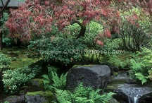 Garden - Japanese Garden / by Nancy Stipa