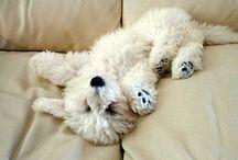 Cute Doggies/Unconditional Love / by Jill Johnson Kiker