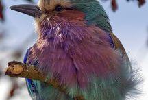 Birds / by Ginger Bakos