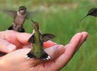HUMMINGBIRDS / by Mary Dumke