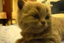 aww cute! / by Taryn Henderson