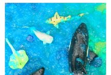 The Ocean & Shark Week / by Teaching Themes & Resources