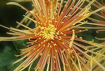 Flowers / by Lisa Tetens