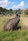 For the Emus / by Anna Wilson