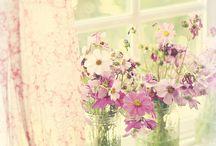flowers / by Maryann Carter