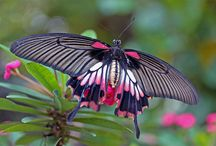 butterfly kisses / ummm...butterflies and dragonflies :) / by Jennifer Smith
